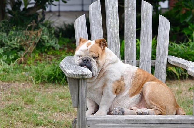 cansado ou cançado